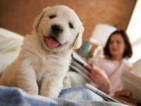 A dog on bed and background have women